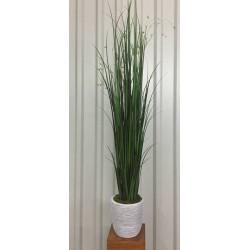 Natur Grass
