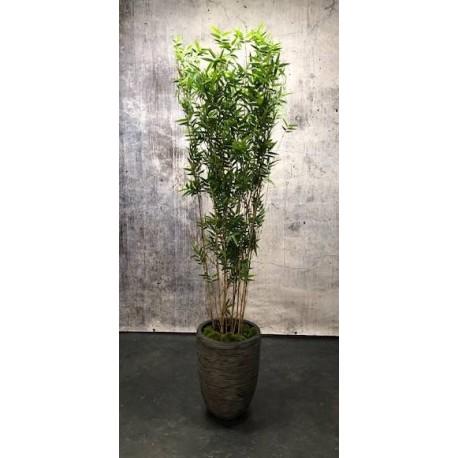 Bambus, 150cm
