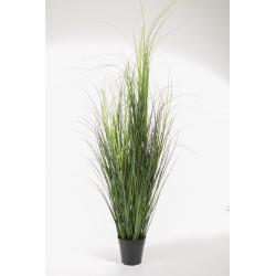 Gras, 105cm