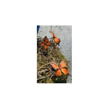 12er Set Deko-Schmetterlinge